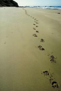 footprints-34878417